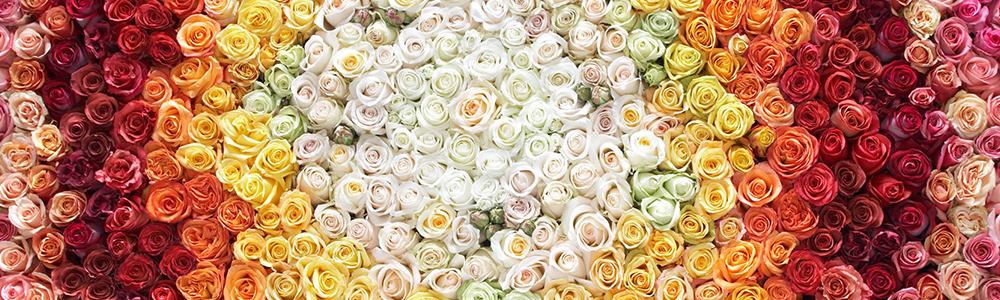 Blumen von Klimesch in verschiedenen Farben: steht für die digitale Anbindung von Klimesch mit dem Lebensmitteleinzelhandel