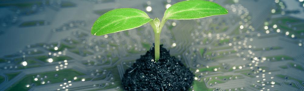 Eine raspberry Pi und eine kleine Pflanze - symbolisch für Unternehmen die durch den Einsatz von EDI nachhaltig agieren.